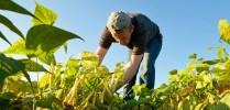 Cursos Americanos Auxiliar de Agricultura Profesional - Foto 2