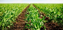 Cursos Americanos Agricultura - Foto 2