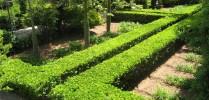 Cursos Americanos Plantacion de Setos - Foto 2